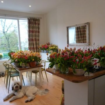 Flowers dog